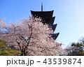 京都 春の東寺 43539874