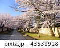 京都 春の醍醐寺 43539918