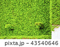 自然環境蔦の壁、ガーデニング 43540646