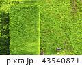 自然環境蔦の壁、ガーデニング 43540871