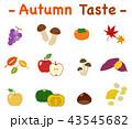 果物 食材 セットのイラスト 43545682