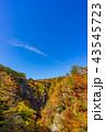 鳴子峡 紅葉 秋の写真 43545723