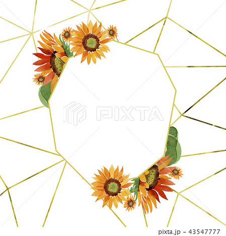 Watercolor orange sunflower flower. Floral botanical flower. Frame border ornament square. 43547777