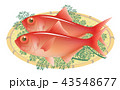 金目鯛 魚 魚類のイラスト 43548677