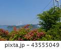 タニウツギと来島海峡展望館から見た来島海峡大橋 43555049