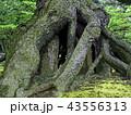 木の根元(兼六園) 43556313