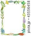 フレーム 葉っぱ 葉のイラスト 43556458