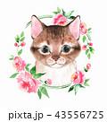 子猫 カード 葉書のイラスト 43556725