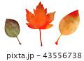 秋 紅葉 葉のイラスト 43556738