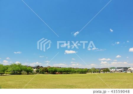 爽やかな青空と街の公園風景 43559048