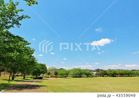 爽やかな青空と街の公園風景 43559049