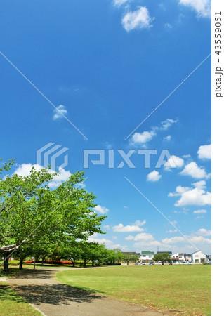 気持ちいい青空の街の公園風景 43559051