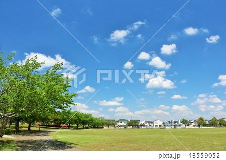 気持ちいい青空の街の公園風景 43559052