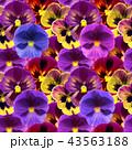 背景 パターン 柄の写真 43563188