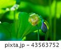 ハナ 咲く 花の写真 43563752