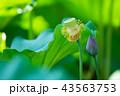ハナ 咲く 花の写真 43563753