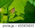 ハナ 咲く 花の写真 43563835
