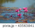 ハナ 咲く 花の写真 43563841