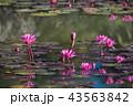 ハナ 咲く 花の写真 43563842
