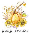 かぼちゃ カボチャ 南瓜のイラスト 43565687