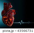 ハート ハートマーク 心臓のイラスト 43566731