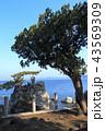 森戸神社 海 海岸の写真 43569309