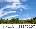 雲 空 青空の写真 43570197