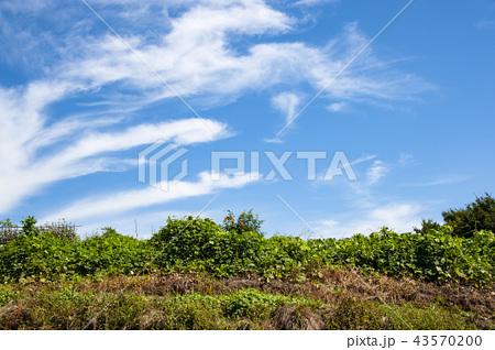 青空白雲 43570200