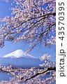 日本の春 富士山と桜 43570395