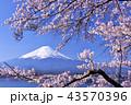 日本の春 富士山と桜 43570396