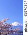 日本の春 富士山と桜 43570397