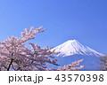 日本の春 富士山と桜 43570398