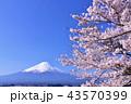 日本の春 富士山と桜 43570399