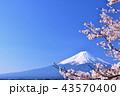 日本の春 富士山と桜 43570400