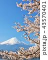 日本の春 富士山と桜 43570401