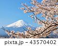 日本の春 富士山と桜 43570402