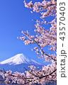 日本の春 富士山と桜 43570403