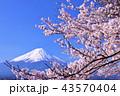 日本の春 富士山と桜 43570404