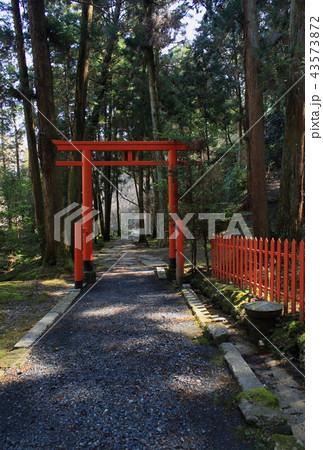 滋賀県大津市の石山寺境内にある八大龍王社の境内から見た鳥居と参道の風景です 43573872