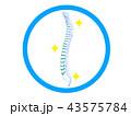 整体 整骨 カイロプラクティックのイラスト 43575784