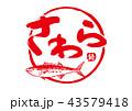 筆文字 文字 魚のイラスト 43579418