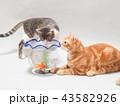 金魚と二匹の仔猫 43582926