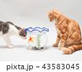 金魚と二匹の仔猫 43583045