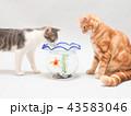 金魚と二匹の仔猫 43583046