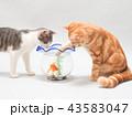 金魚と二匹の仔猫 43583047