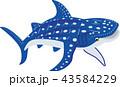 ベクター ジンベイザメ ジンベエザメのイラスト 43584229
