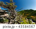 金峰山 山 秋の写真 43584567