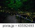 ホタル ヒメボタル 相生山の写真 43592493
