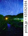ホタル ゲンジボタル 光跡の写真 43592494