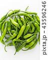 野菜 獅子唐 獅子唐辛子の写真 43596246